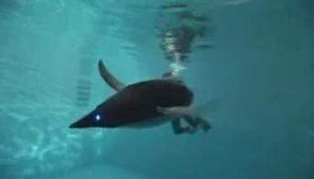 robotic-penguin