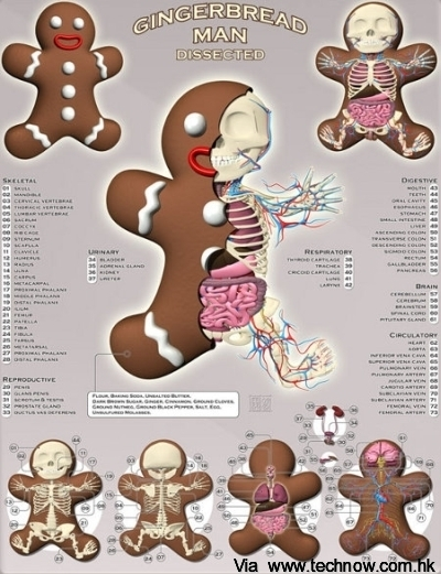 gingerbread-man-dissected