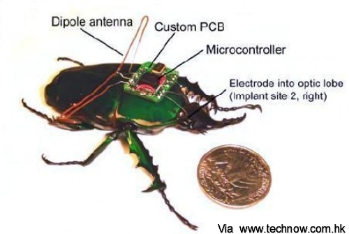 cyborg_beetle_microcontroller_controlled