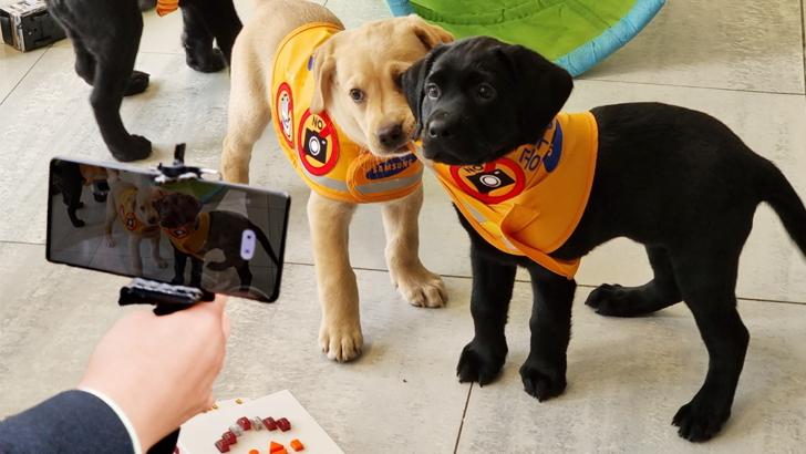 【以galaxy-s21系列捕捉世界】《國際導盲犬日》致敬地表最強「萌」友!